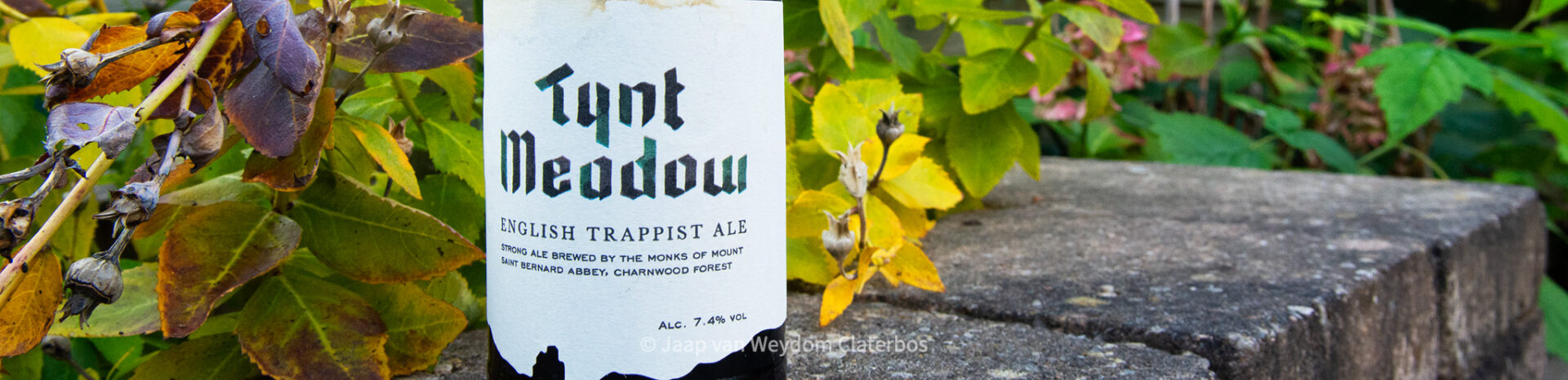 Tynt Meadow English Trappist Ale